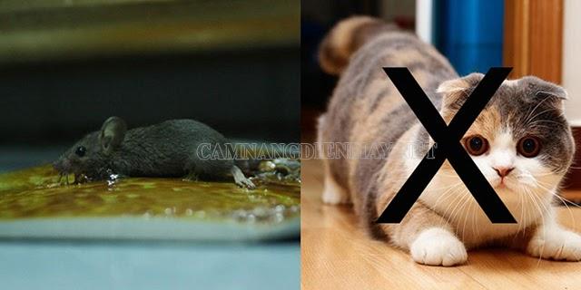 Cách tẩy keo dính chuột trên sàn nhà hiệu quả