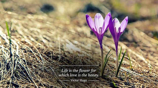Định nghĩa tình yêu của Victor Hugo
