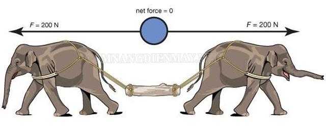 Xác định gia tốc của một vật như thế nào?